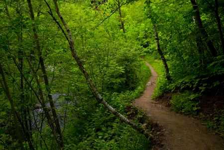 A path out of the dark forest of the North Woods of Minnesota. Stock Photo - 3258846