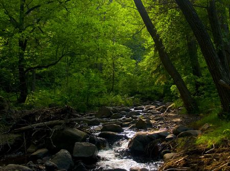 Sunlight filters through a green forest and stream.