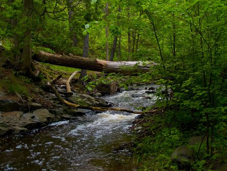 north woods: A forest brook under a fallen tree trunk in the North Woods of Minnesota. Stock Photo