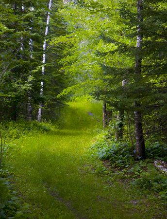 A green track through the wet North Woods of Minnesota.