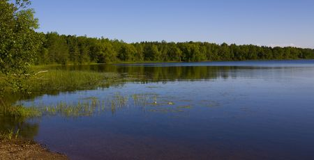 north woods: A forested shoreline of a lake in the North woods of Minnesota