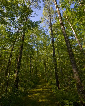 north woods: A path into the North Woods of Minnesota. Stock Photo