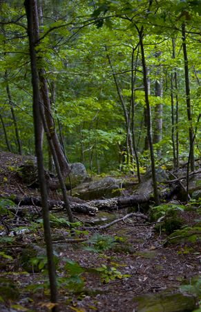 north woods: A cool forest scene in the North woods of Minnesota Stock Photo