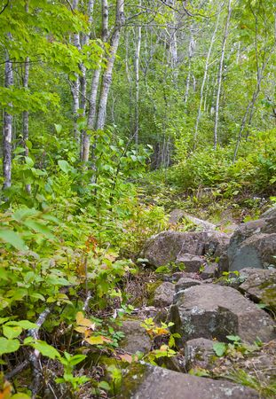north woods: Stones and birch trees in the green forests of the north woods of Minnesota.