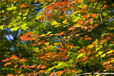 north woods: September as the leaves begin to change in the North Woods of Minnesota. Stock Photo