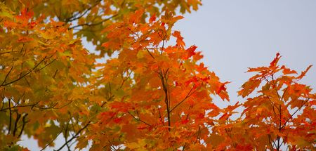 north woods: September Treetops in the North Woods of Minnesota Stock Photo
