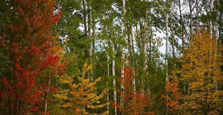 その 9 月パレット内の色の赤、オレンジ、黄色、および緑のミネソタの北の森。