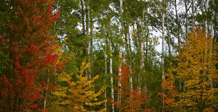 Minnesota north woods in their September palette of red, orange, yellow, and green colors. Imagens - 3621684