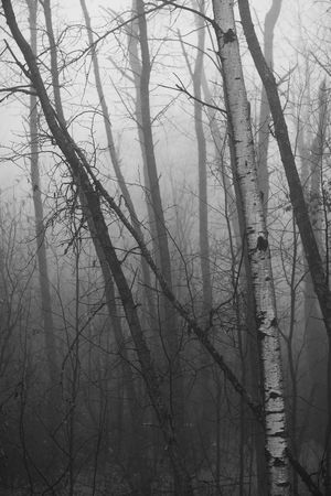 A November fog in the north woods of Minnesota