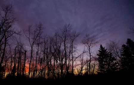 north woods: November dusk in the north woods of Minnesota