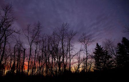 November dusk in the north woods of Minnesota