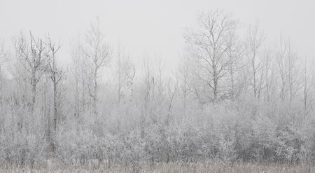 north woods: The forested shoreline of a small lake in winter fog in the north woods of Minnesota Stock Photo