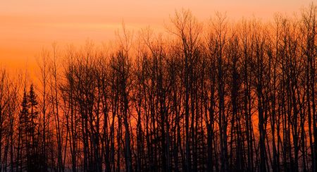 Sunset behind the winter forest of the north woods of Minnesota