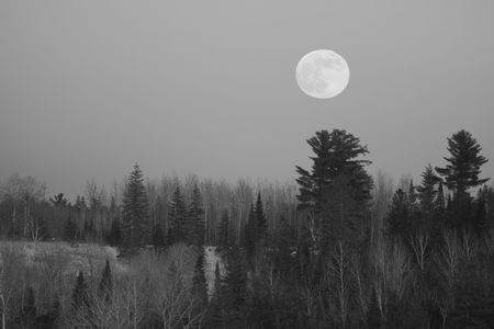 Full moon over a winter forest in Northern Minnesota photo