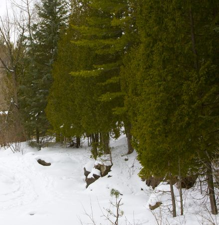 amity: Evergreens along the banks of snow covered Amity Creek in Duluth, Minnesota Stock Photo