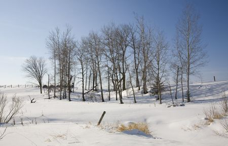 Winter scene on a rural northern Minnesota farm Stock Photo - 4288501