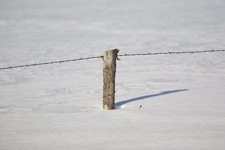 bobbed: Rustic barbed ( also known as barb, bob, and bobbed) wire fence with a rough hewn fence post buried in snow in Northern Minnesota