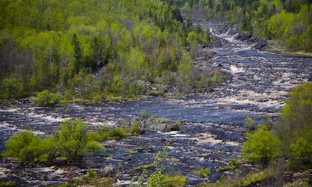 Spring Forest and the Raging St. Louis River in the North Woods of Minnesota