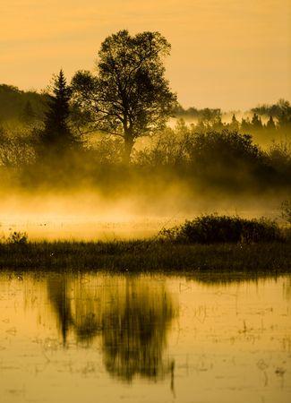 Morning marsh, mist, and tree along the margin of Island lake in Northern Minnesota