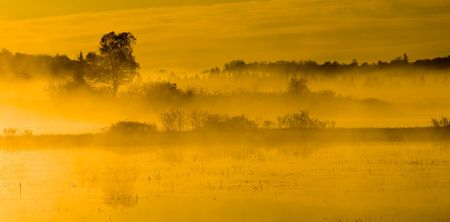 Morning sunlight bathes the marsh on the margin of Island Lake in the North woods of Minnesota