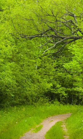 Tree overhangs a trail in the vivid green forest of the North woods of Minnesota Stock Photo