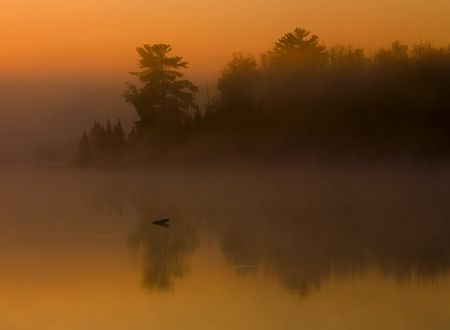 Fog, forest, and water at sunrise on Boulder Lake in Northern Minnesota