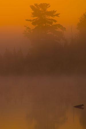 Tree in Fog and an orange dawn on Boulder Lake in Northern Minnesota