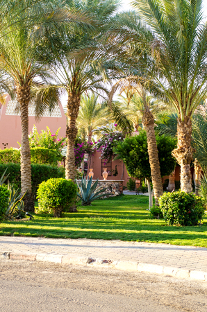 hurghada: Palm trees, shrubs, ornamental plants along the road. Egypt, Hurghada, Africa.