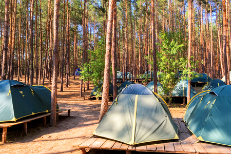 noon: Tents of scouts or tourists in the forest on wooden platforms. In a bright sunny day.