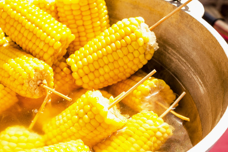 A lot boiled golden corn on the cob. Pierced on wooden sticks. Boiling in a pot. Close-up. Stock Photo