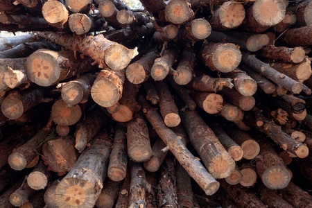 Stacked firewood in a pile outdoors close-up. A pile of chopped firewood ready for stacking. Preparation heating house in winter. Outdoors.