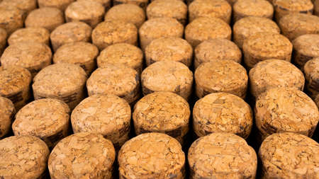 A lot of rows different wooden champagne or wine corks from cork tree.