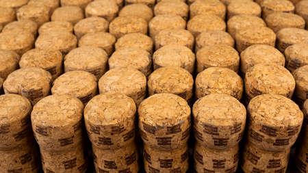 A lot of rows different wooden champagne or wine corks from cork tree