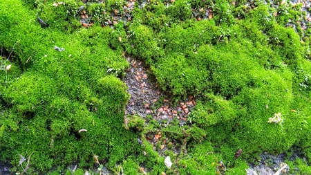Green moss or lichen growing on granite wall. Abstract background. Close-up. Outdoors.