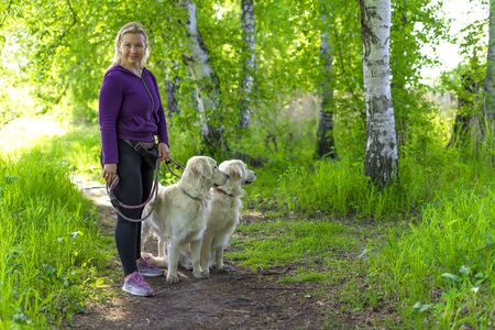 The blonde stopped on a forest path with her Golden Retriever dogs. The dogs look away warily.