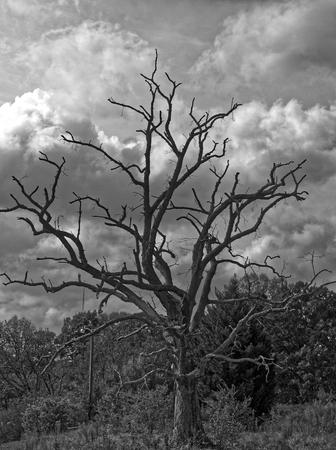 Lone Oak on Stormy Day
