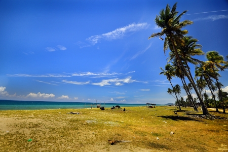 nature background coconut tree at the beach with clear sky photo