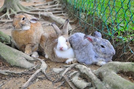 lagomorpha: three rabbit line up