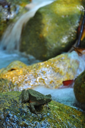 frog   toad sitting on the rock near waterfall photo