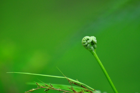 bionics: young fern bud with green background Stock Photo