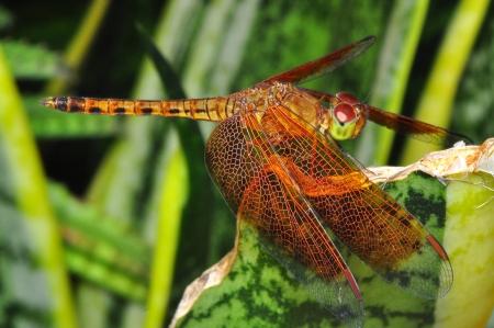 Dragonfly resting photo