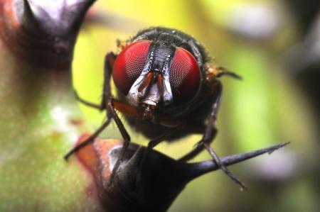 Flies Archivio Fotografico