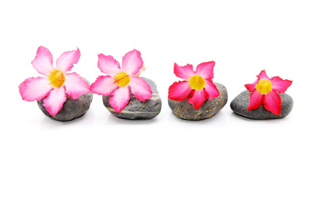 Zen And Spa Stone With Frangipani Flower Over White Background  photo