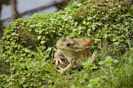 Big Frog photo
