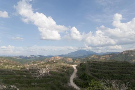 replant: Recentemente Ripiantare palma da olio Piantagione On The Hill con nuvole e cielo blu