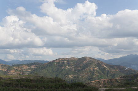 replant: Newly Replant Oil Palm Plantation On The Hill With Clouds And Blue Sky
