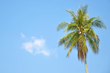 space   area: Coconut Tree Under Blue Sky With Copy Space Area