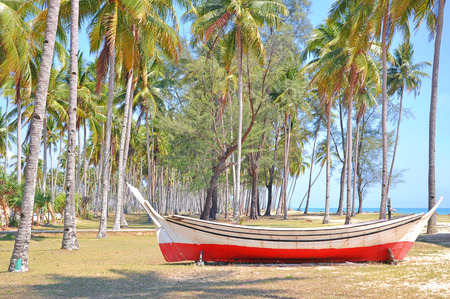 wooden boat: The coconut trees and wooden boat under blue sky at the beach. Stock Photo