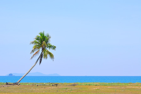 south space: The coconut tree under blue sky at the beach of south china sea with copy space area