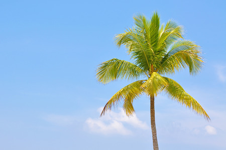 space   area: The Coconut Trees Under Blue Sky With Copy Space Area